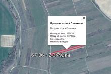Продава лозе в Славянци 067036